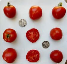 Stupice - Organic Heirloom Tomato Seeds - First To Ripen -Very Early - 40 Seeds