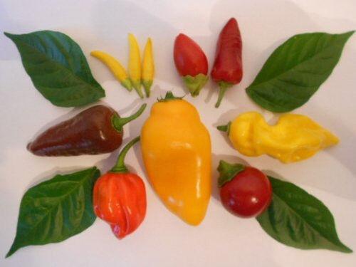 Chilisamen-Mix Mild bis XXL Hot 6 Arten zu jeweils 20 Samen also 120 Samen