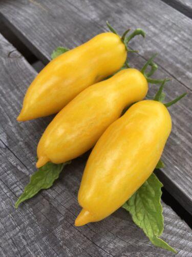 "Tomate ""Banana Legs"" samenfestes Bio Saatgut Alte Historische Sorte Sämereien"