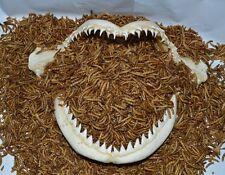 1/8 lb.+ 1/2 oz.FREE~ Premium Freeze Dried Mealworms~OSCAR~ CICHLIDS Fish Food