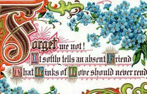 1910-Embossed-Forget-Me-Not-Flowers-Greeting-Postcard-Pierce-Sudlersville