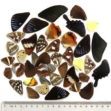 LOTS REAL BUTTERFLY wing jewelry butterfly material ooak fairy DIY artwork #18