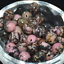 Wholesale-Lot-Natural-Stone-Gemstone-Round-Spacer-Loose-Beads-4MM-6MM-8MM-10MM thumbnail 78