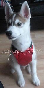 BNWT-Dog-Puppy-Harness-sizes-S-M-L-Small-Medium-Large-padded-car-seat-belt