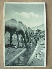 VINTAGE WWII POSTCARD WATERING CAMELS SOUTHERN PALESTINE 1944