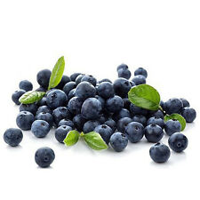 50Pcs Giant Blueberry Tree Seeds Fruit Bonsai Edible Plant Garden Delicious Seed