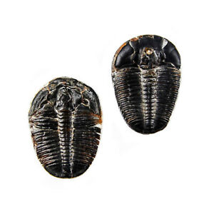 Quality Handcrafts Guaranteed Trilobite Fossil Lapel Pin