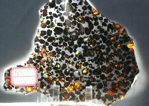 Sericho-Pallasite-Meteorite-from-Kenya-Africa-Habaswein-181-7g-complete-slice
