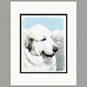 Great-Pyrenees-Dog-Original-Print-8x10-Matted-to-11x14