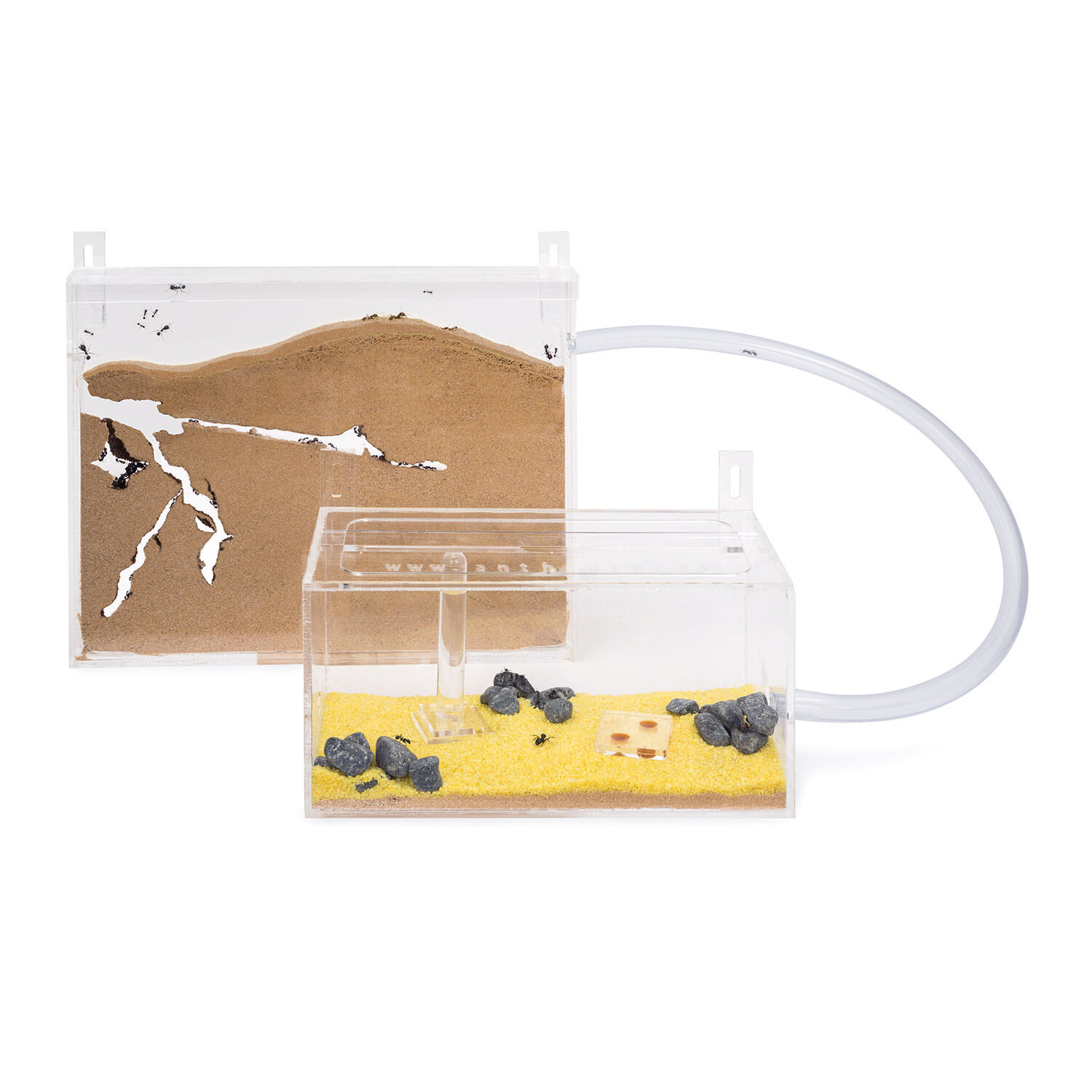 Sand Ant Farm Wall Kit BIG - Educational formicarium for LIVE ants