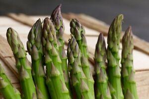 150-Mary-Washington-Asparagus-Seeds-Non-GMO-Heirloom-Asparagus