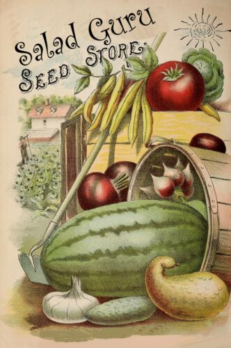 Sweet Genovese 700 Seeds PESTO SWEET BASIL  FREE DELIVERY Basil