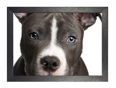 Pitbull Puppy Close Up Face Dog Cute Sweet Animal Wild Poster Best Friend Love