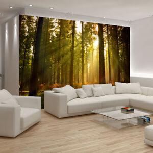 tapete fototapete poster wand wald baum sonne holz natur. Black Bedroom Furniture Sets. Home Design Ideas