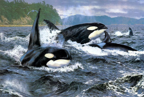 """oil painting print on canvas Orca-Stration Art QUALITY 24/""""x36/""""Home decor Art"""