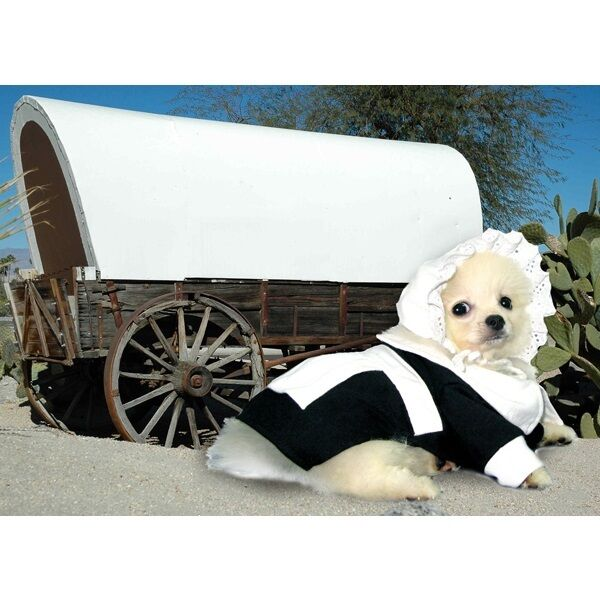 Alta Calidad Perro Disfraz Pilgrim Niña Disfraces Vestido Tu para Thanksgiving
