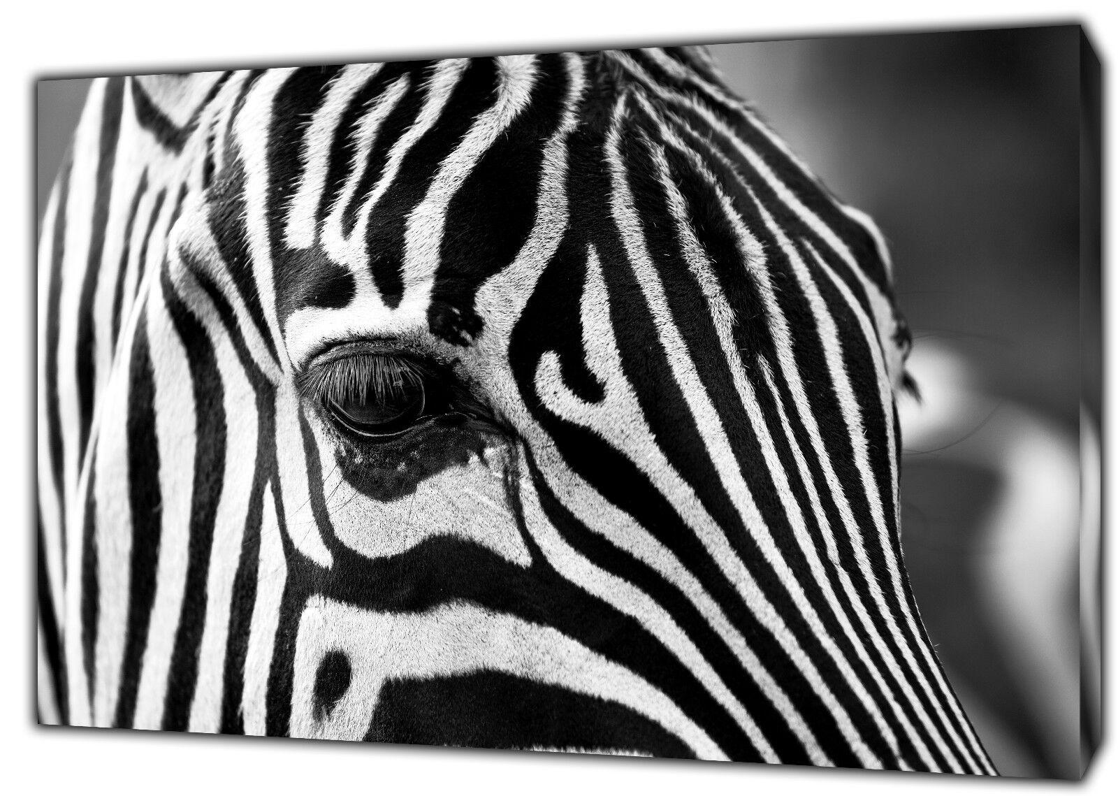 TESTA di Zebra Zebra Zebra Zoom Foto stampa Su Tela Incorniciato Wall Art Decorazione Casa Ufficio b4d8c3