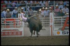 331083 Bull Riding A4 Photo Print