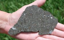 Huge full slice of NWA 3118 CV3 meteorite 134 by 80mm!