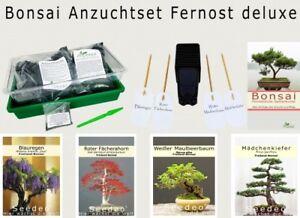 Seedeo ® Bonsai Anzuchtset Extrême-orient Deluxe-afficher Le Titre D'origine Service Durable
