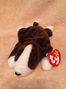 7d728bdc256 TY Beanie Baby - BRUNO the Bull Terrier Dog - Pristine with Mint ...