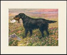FLAT COATED RETRIEVER AND GROUSE LOVELY DOG PRINT MOUNTED READY TO FRAME