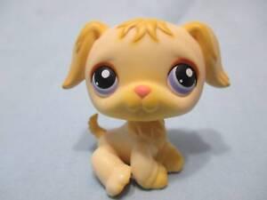 Littlest-Pet-Shop-Lps-268-Golden-Retriever-Puppy-Dog-Purple-Eyes