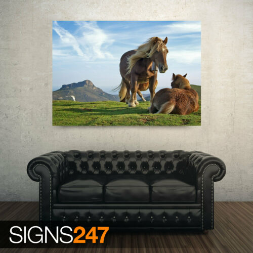 Picture Poster Print Art A0 A1 A2 A3 A4 Animal Poster 3697 HILL HORSES