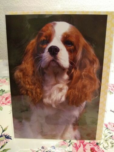 Cavalier king Charles spaniel Blenheim birthday card
