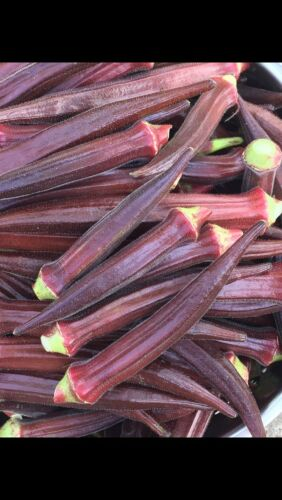 FRESH ORGANIC 2020 Okra Burgundy Red 25 Seeds Non Gmo Heirloom Vegetable Grown