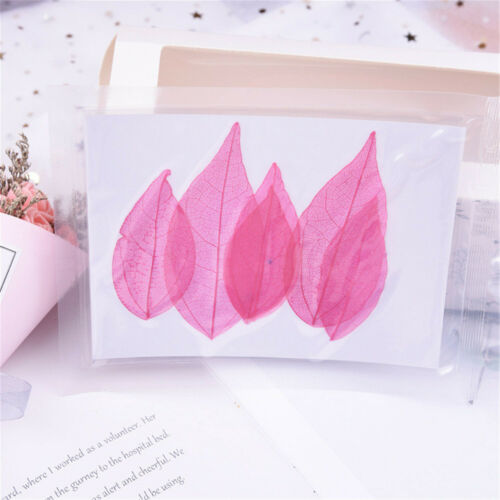 6pcs//Set Dried Leaf Vein Organic Bookmark Collection DIY Decoration Accessories