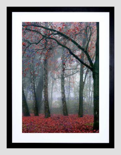 NATURE FOREST TREE AUTUMN FALL BEAUTIFUL RED BLACK FRAMED ART PRINT B12X4042