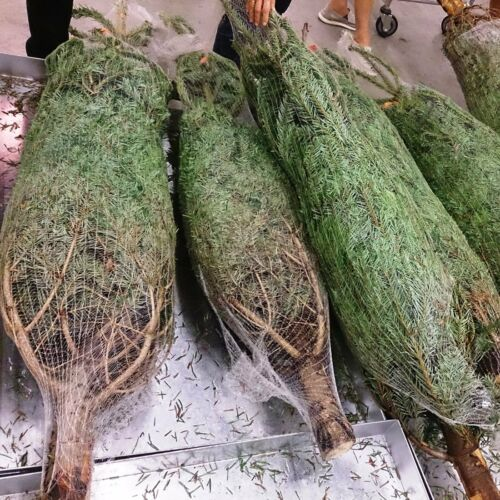 Bale of 3000m. LZ34 Christmas Tree Netting 34cm Xmas Tree Net