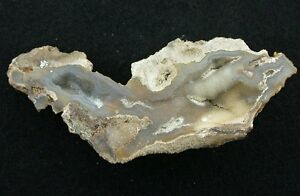 Tampa-Bay-Agate-Fossil-Fossilized-Prehistoric-Coral-Slice-Nodule-LOWEST-EBAY