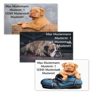 40-Adressetiketten-Adressaufkleber-oder-10-Visitenkarten-Motiv-034-Hunde-034