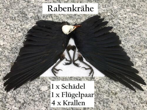 Krähenkrallen Rabe Rabenkrähe Krähenflügel Göthic Flügel Echter Schädel