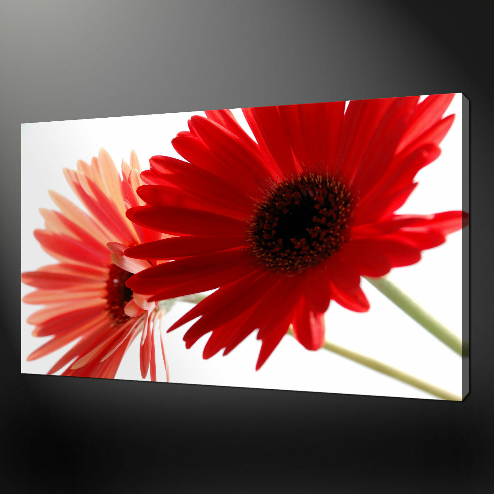 rot GERBERA FLORAL QUALITY CANVAS PRINT WALL DESIGN READY TO HANG