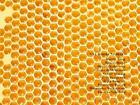 XVI. Rohkunstbau von Sabine Ziegenrücker, Stanislaw Lem, Emma Braslavsky, Arvid Boellert und Mark Gisbourne (2009, Taschenbuch)