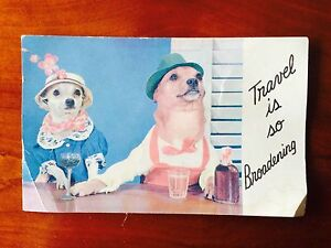 VINTAGE POST CARD - dogs in clothes - TRAVEL IS SO BROADENING - free shipping