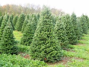 CHRISTMAS-TREE-PINE-Candle-Fragrance-1oz-Oil-scent-crafts-soap
