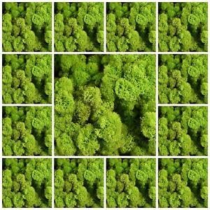 Lime-Green-Natural-Norwegian-Reindeer-Moss-Preserved-Dried-Craft-Flower-Stamen