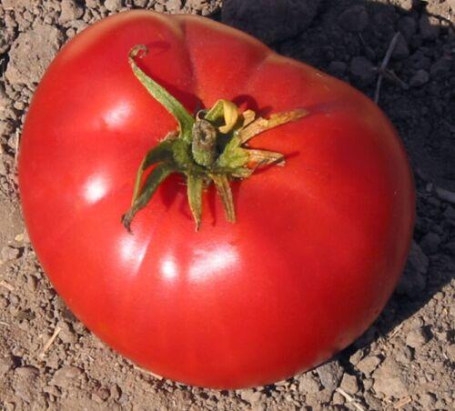 Brandywine Heirloom Tomato Seeds