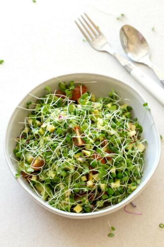 4 delicious types Microgreen Seed Selection
