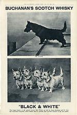 SCOTTISH TERRIER WESTIE DOG Black & White Scotch Whisky James Buchanan Ad 1921