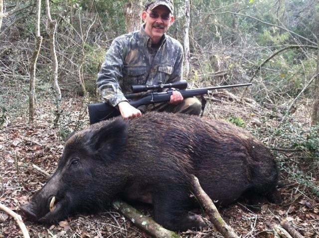 Wild Hog Hunts