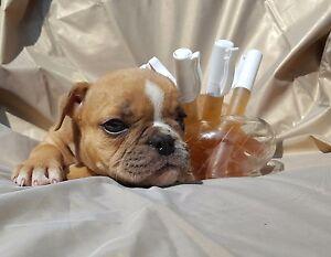 übler Geruch Nach Hunde Kot Urinjetzt Ab 30ml Testenclean