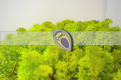 Spring Green Reindeer Moss train warcraft models 500g