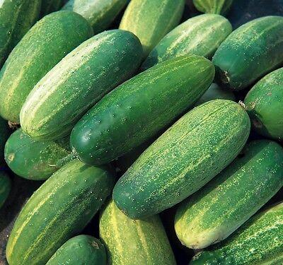 Vegetable - Gherkin National  - 25 Seed