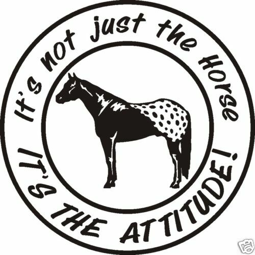 APPALOOSA  ATTITUDE HORSE DECAL Saddle spurs rope