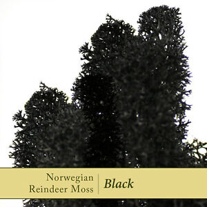 Dried-Reindeer-Moss-Black-Perfect-for-air-plants-terrariums-amp-Crafts